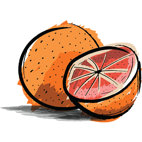 grapefruit coloured sketch